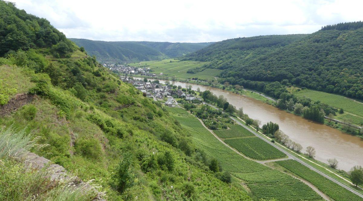 Moselsteig-Etappe: Von Cochem nach Beilstein durch steile Weinberge