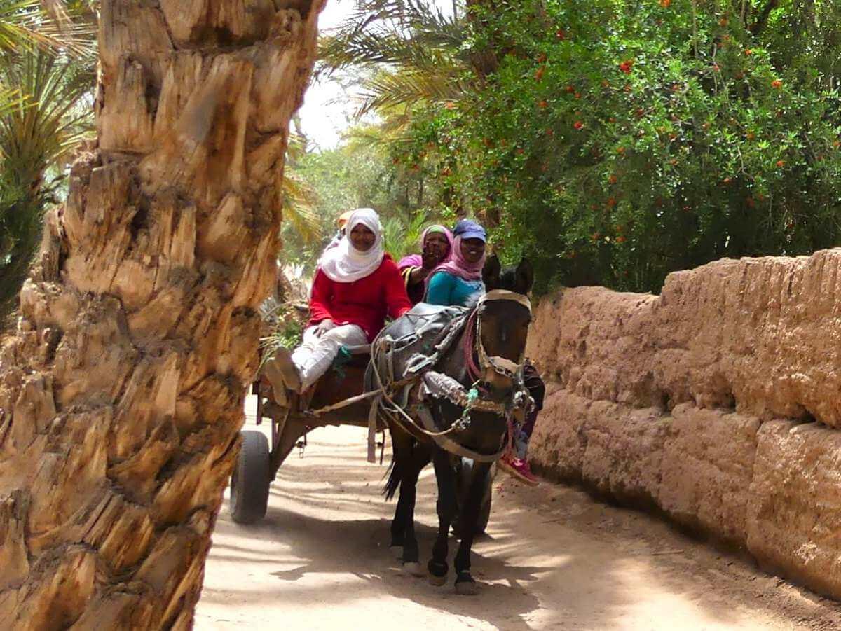 Frauen auf einem Eselkarren im Draa-Tal.