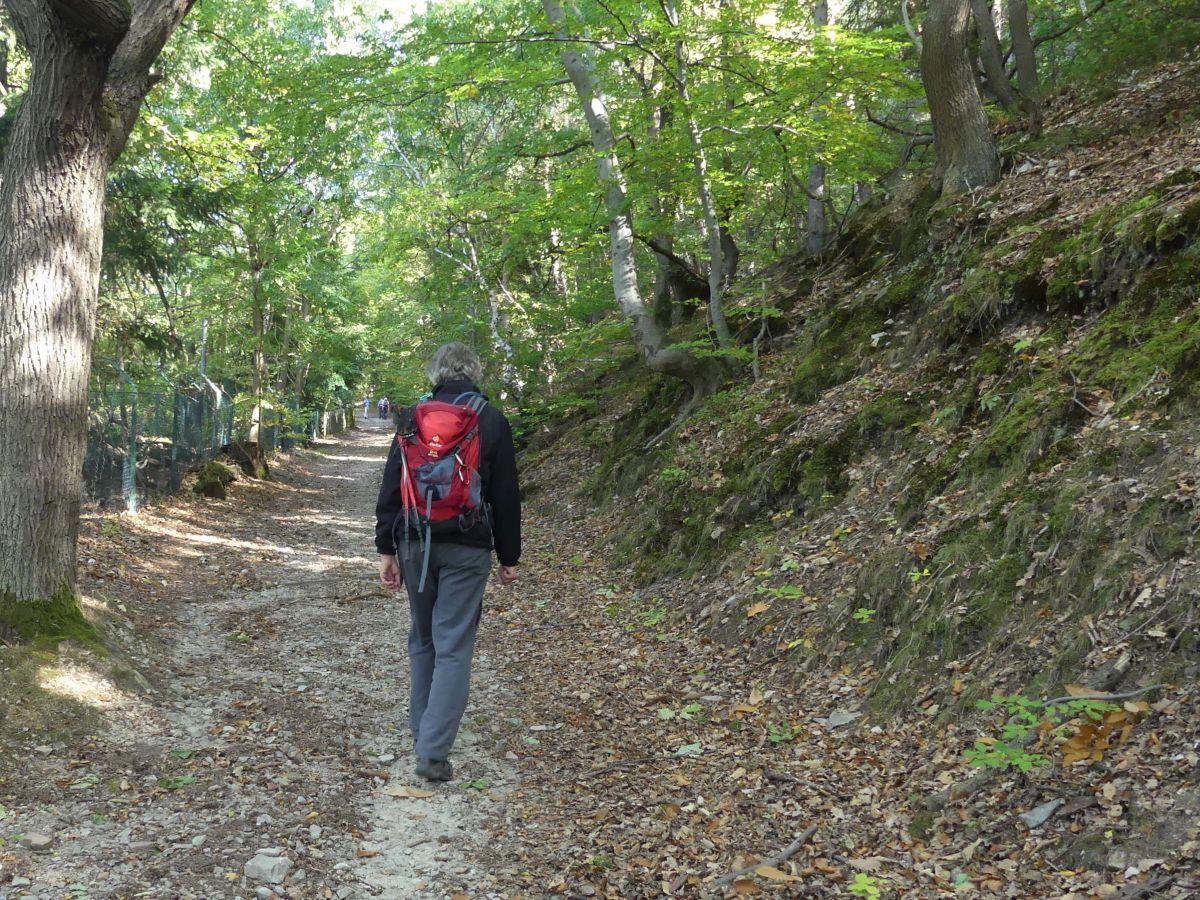 Marcus wandert durch herbstlichen Wald