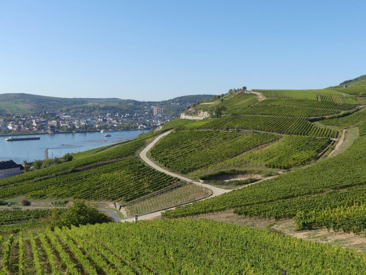 Weinberge und Rhein