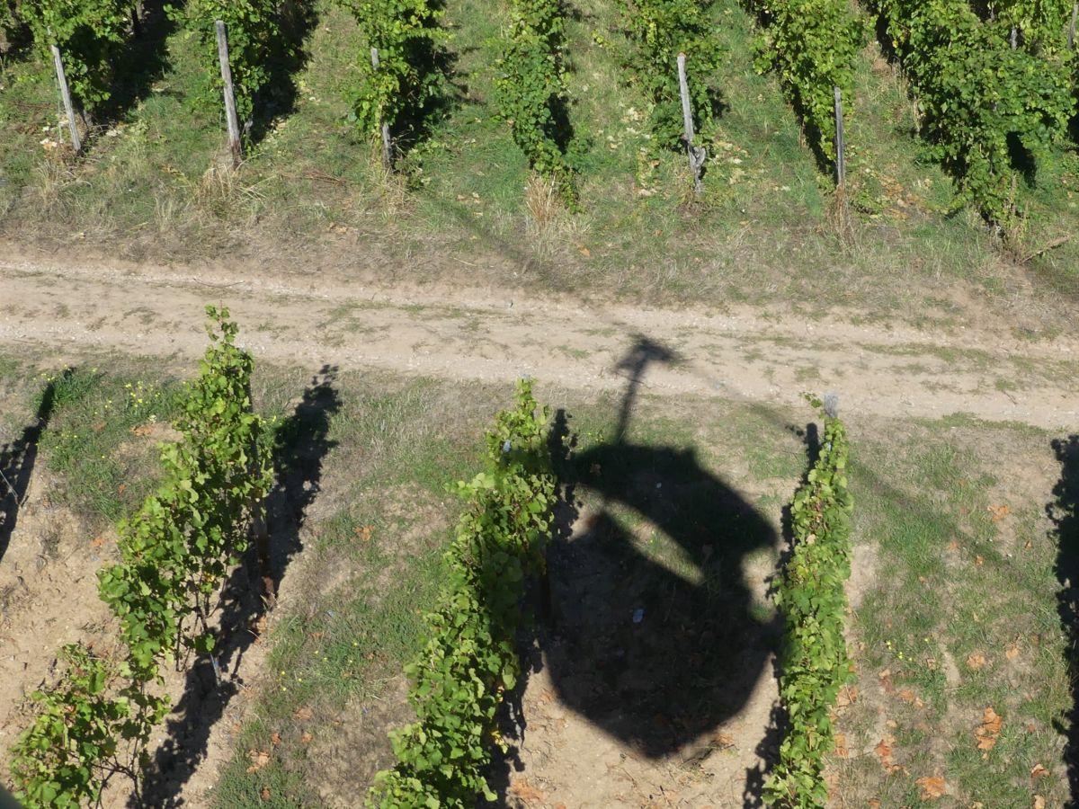 Schatten der Seilbahn-Gondel auf den Weinbergen