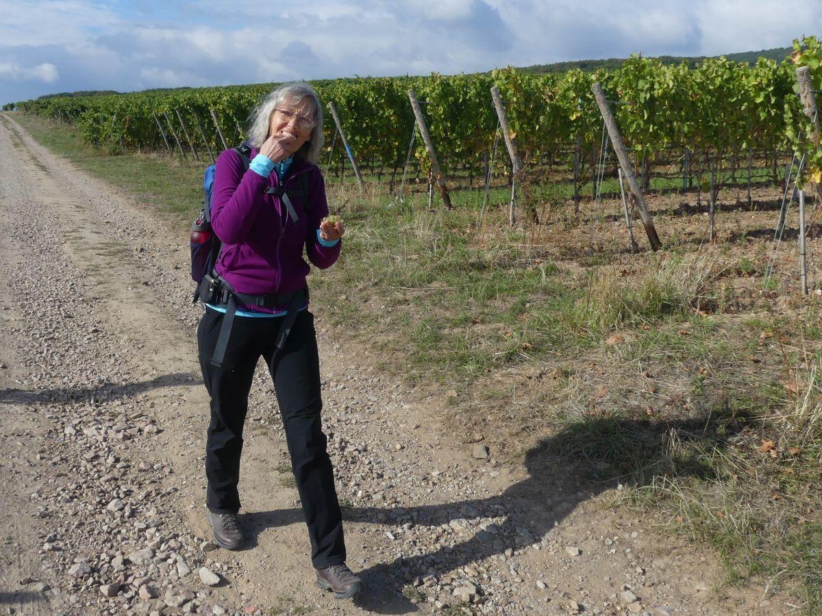 Gina nascht Weintrauben