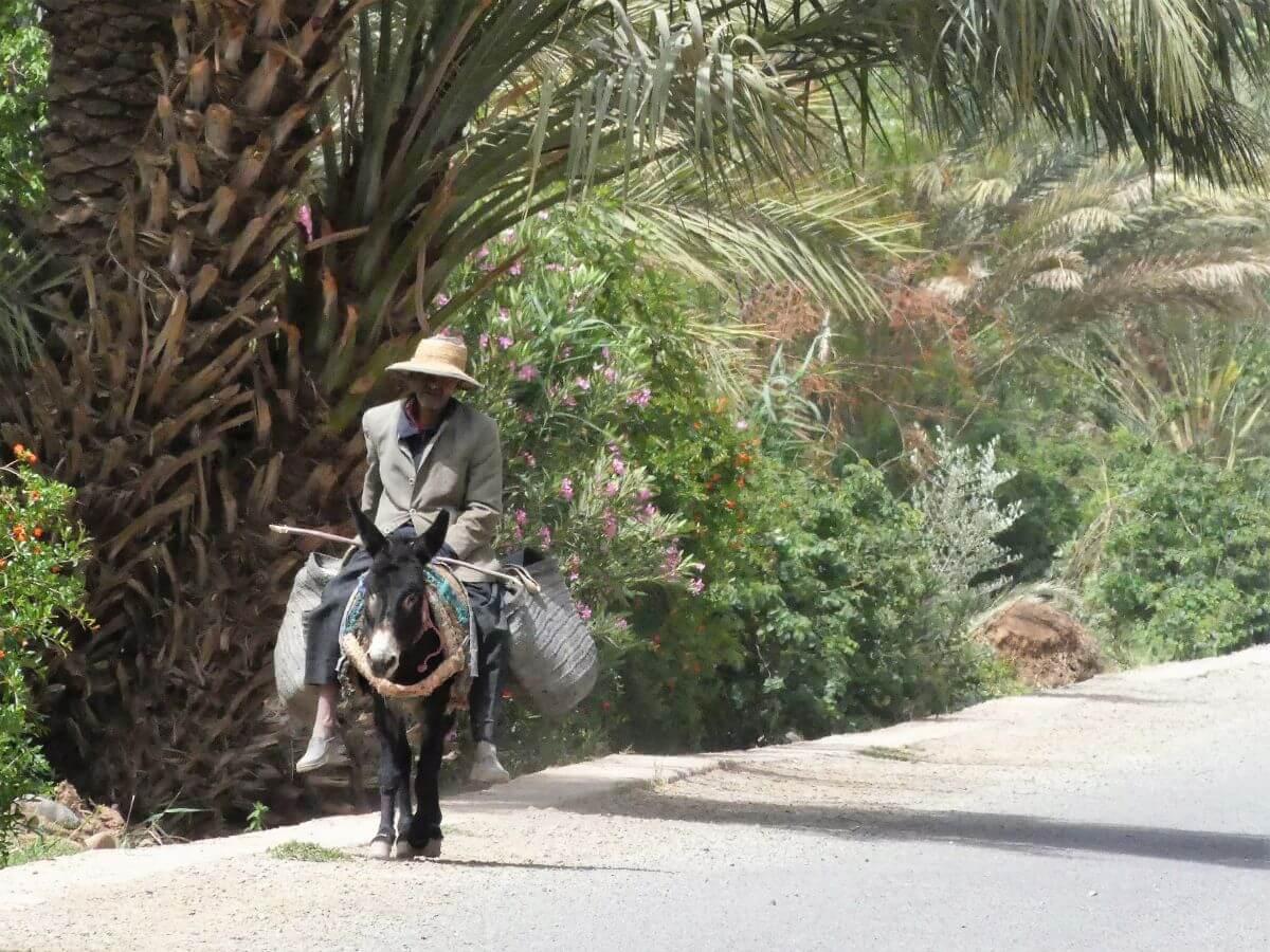 Mann reitet auf einem Esel auf der Straße