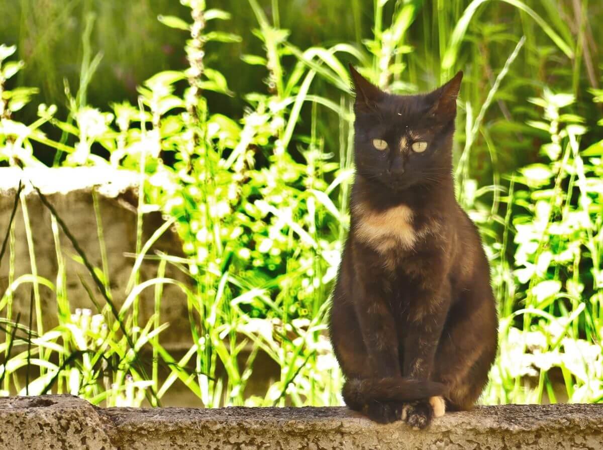 Schwarze Katze sitzt auf Mauer