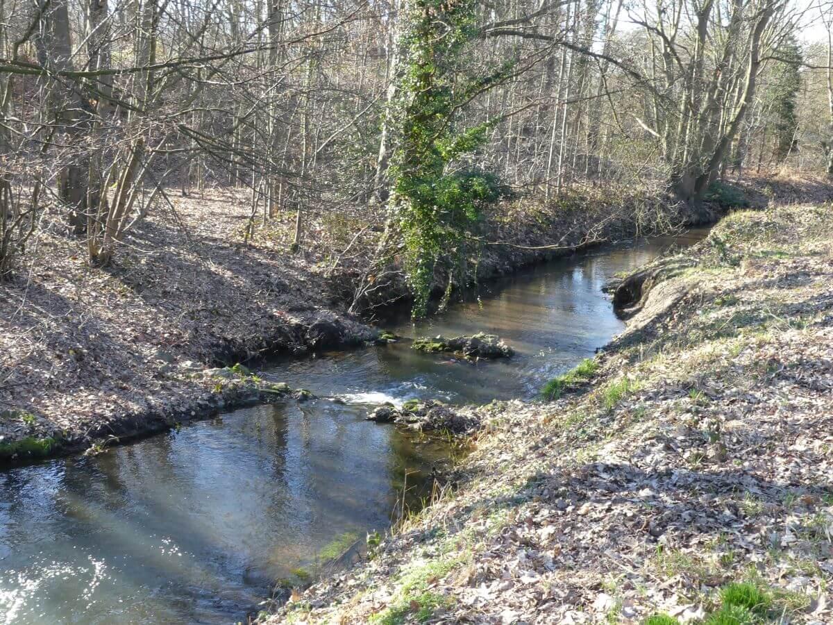 Bach durch winterlichen Wald