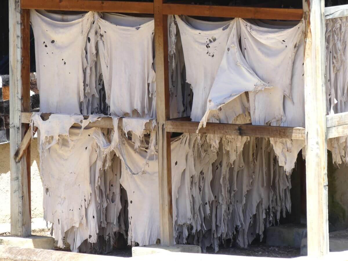 Viele Lederhäute hängen auf Leinen unter einem Schutzdach.