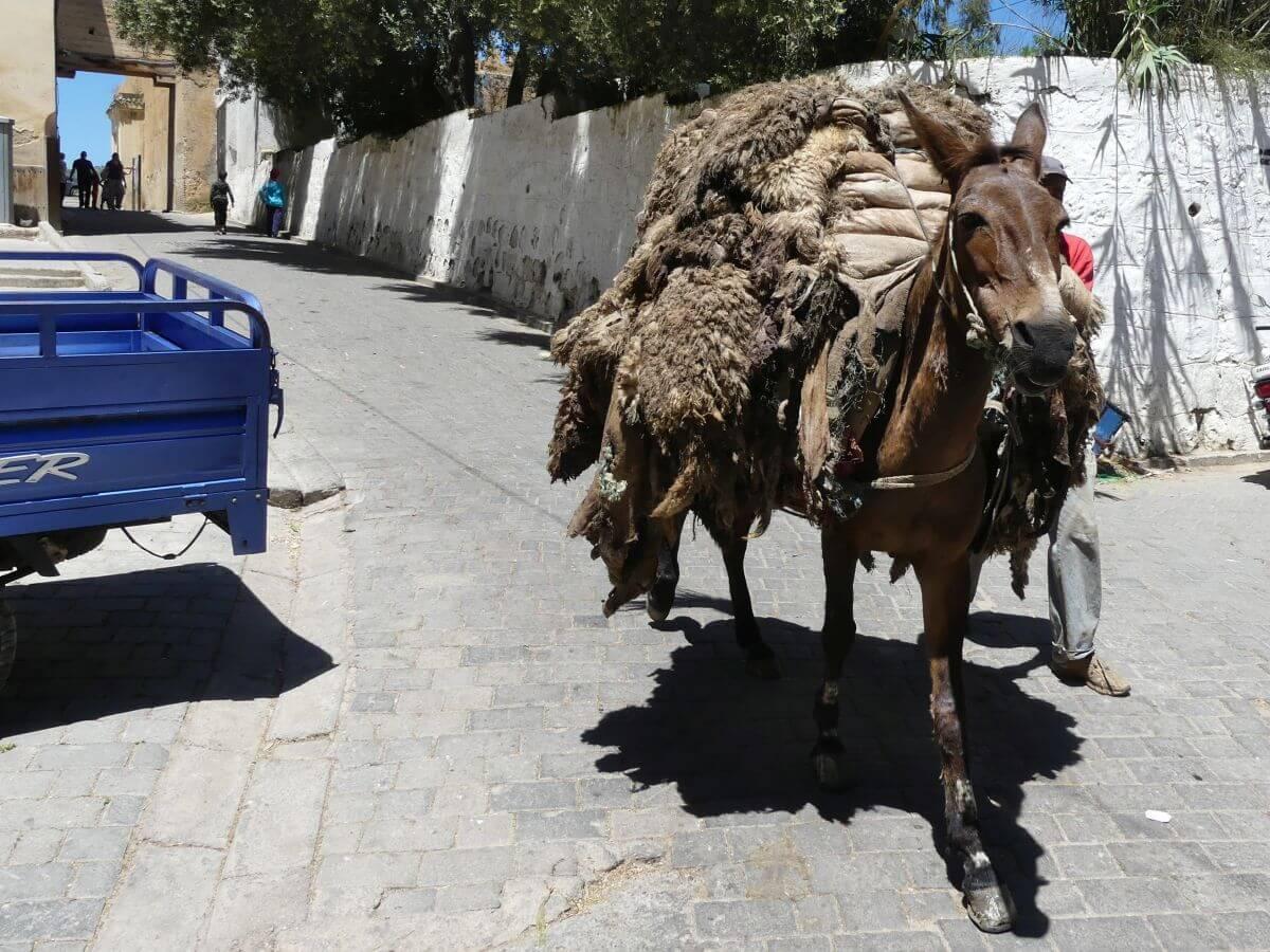 Ein Esel ist beladen mit Fellen.