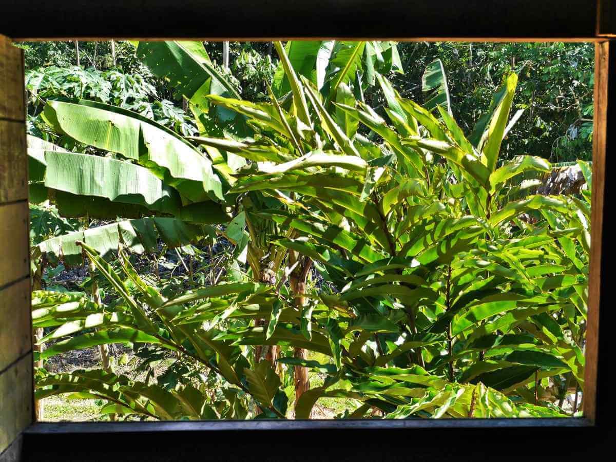 Blick aus Fensterrahmen ins Grüne.