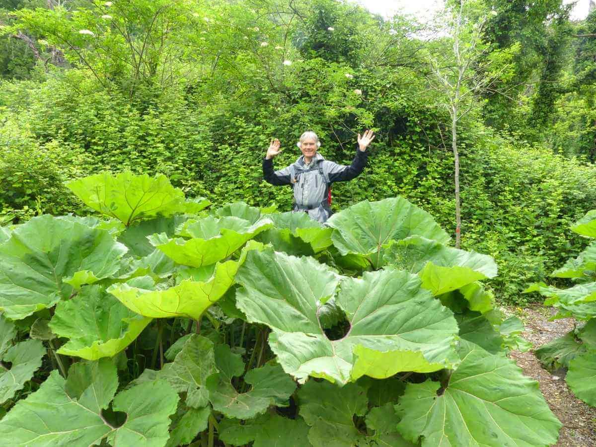 Marcus steht hinter Pflanzen mit riesigen Blättern.