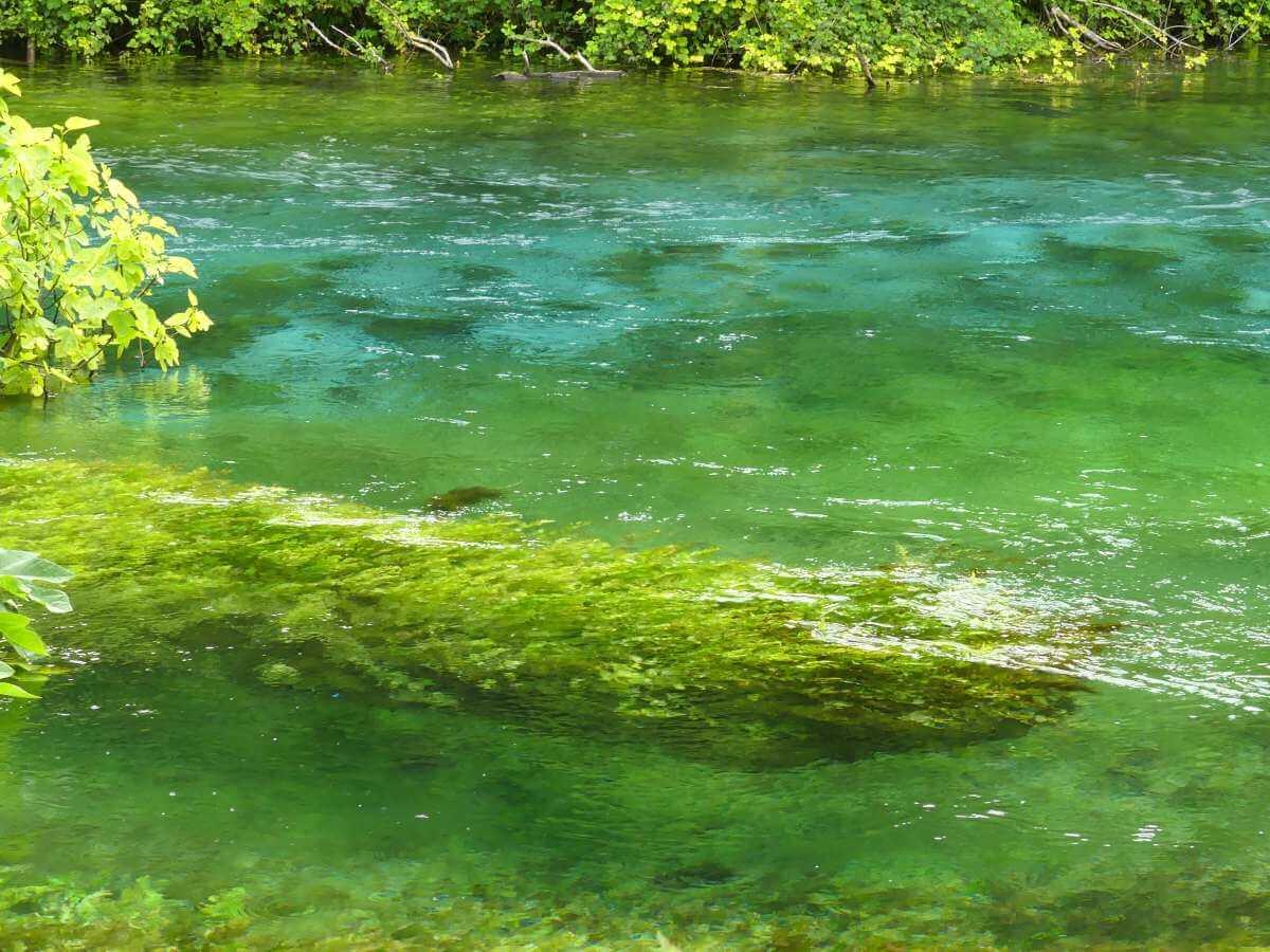Grüne, klare Wasserfläche mit Baumstamm unter Wasser am Blue Eye.