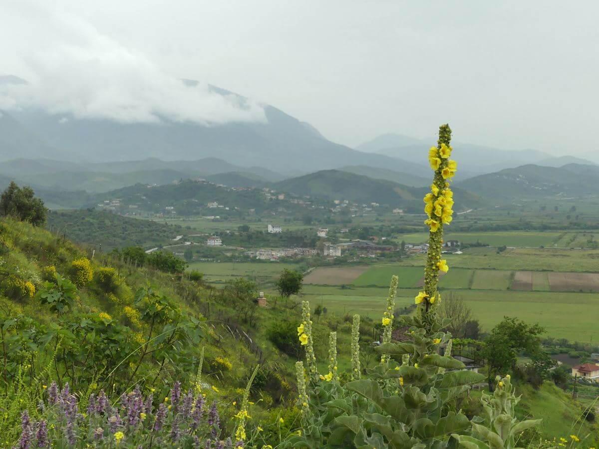 Pflanzen mit gelben Blüten im vordergrund, dahinter regenverhangene Berge.