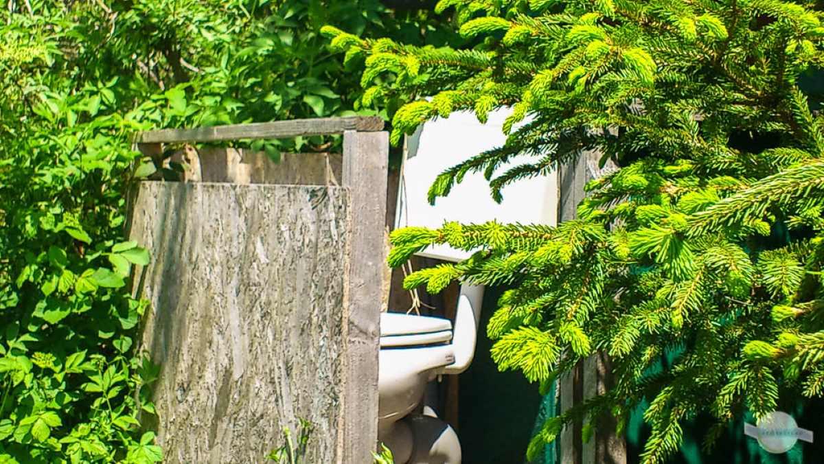 Toilette zwischen Holzwand und Büschen.