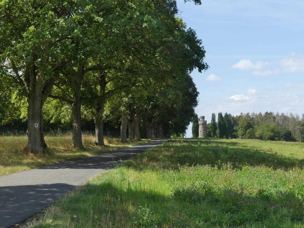 Weg an großen Bäumen entlang.