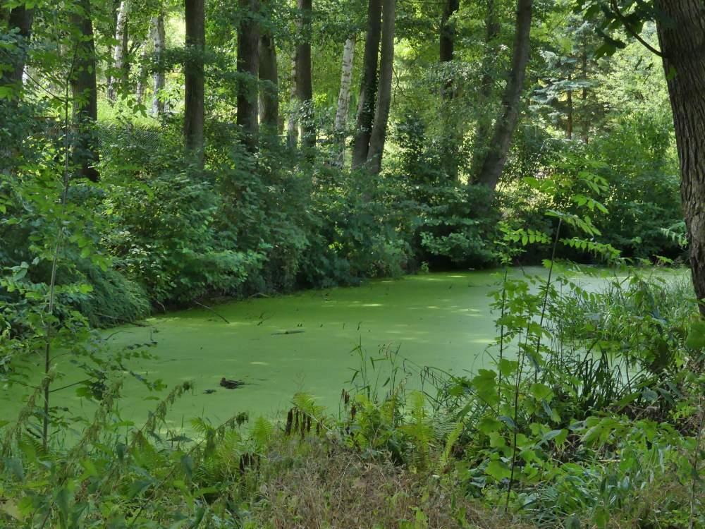 Grüne Wasserfläche im Wald.