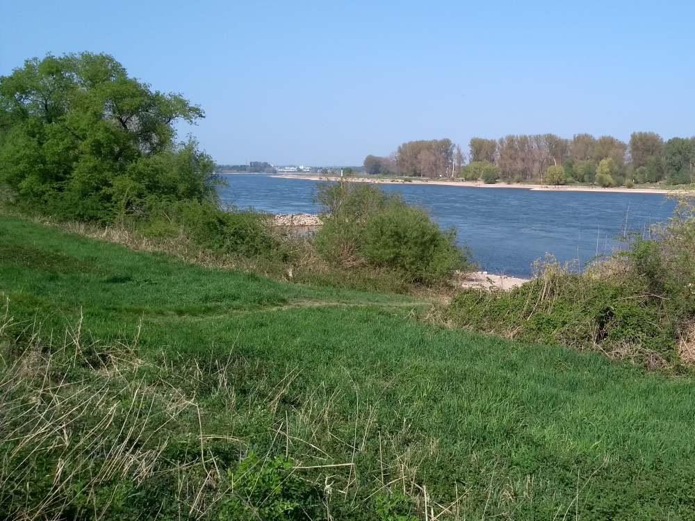 Blick über den Rhein.