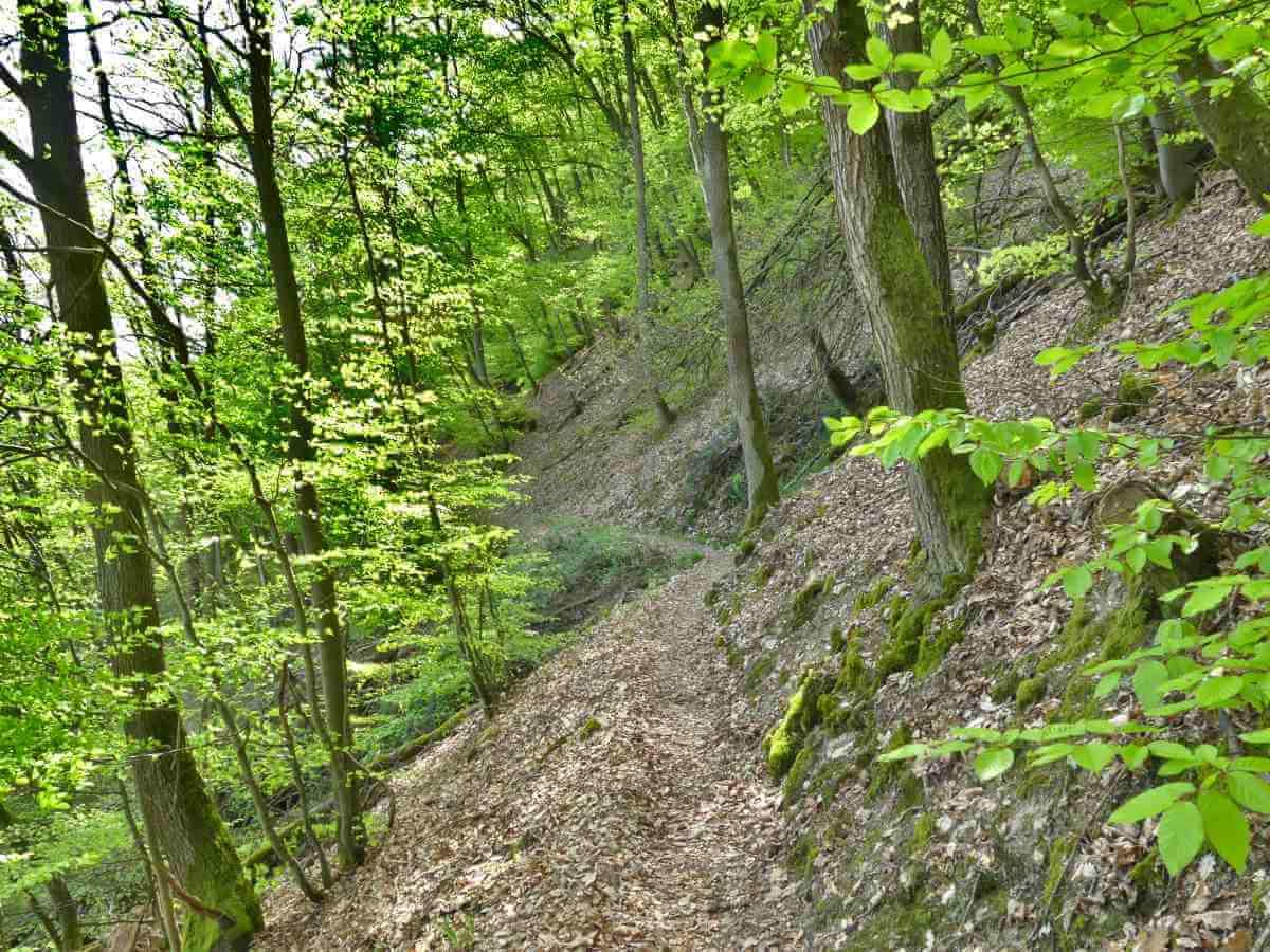 Steiler Hang im Wald mit schmalem Weg.