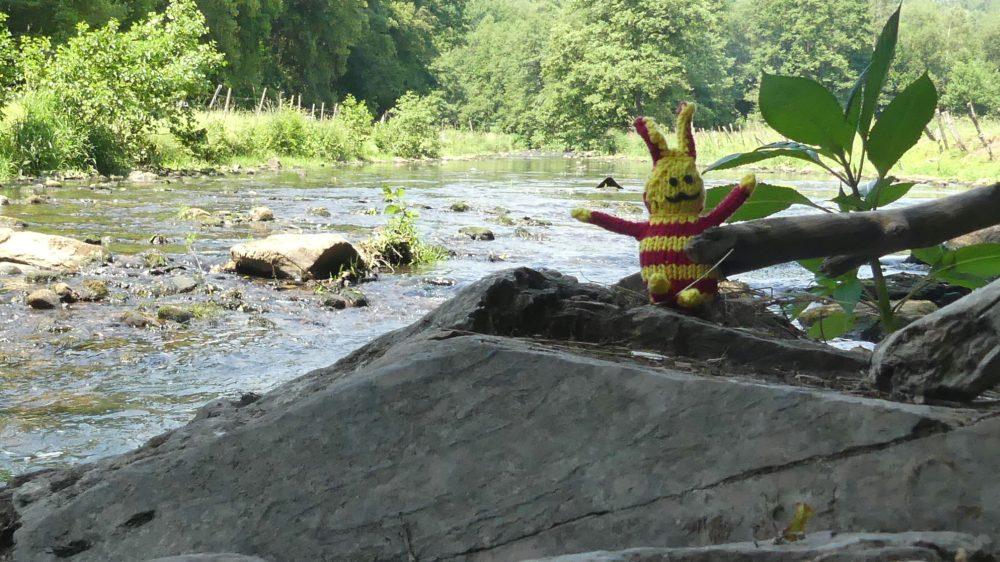 Ringel am Flussufer zwischen Steinen.