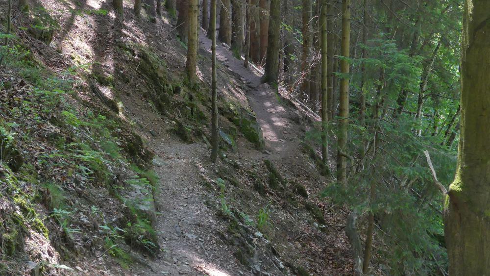 Schmaler Pfad im Wald.