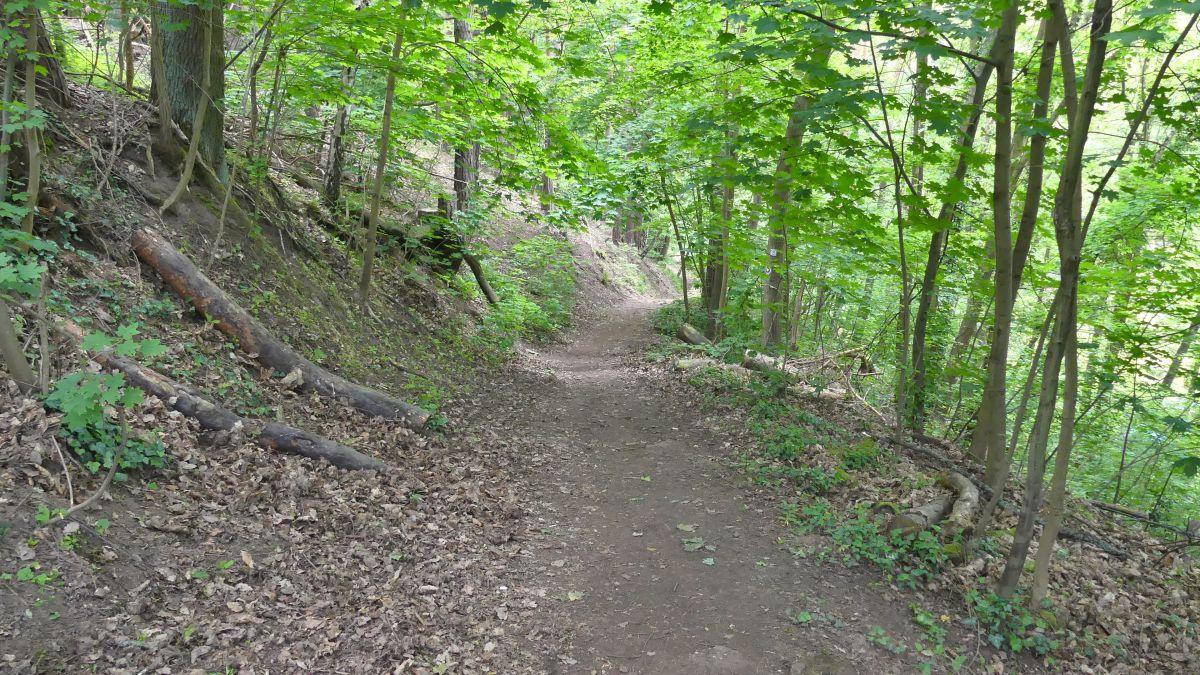 Weg im grünen Wald.