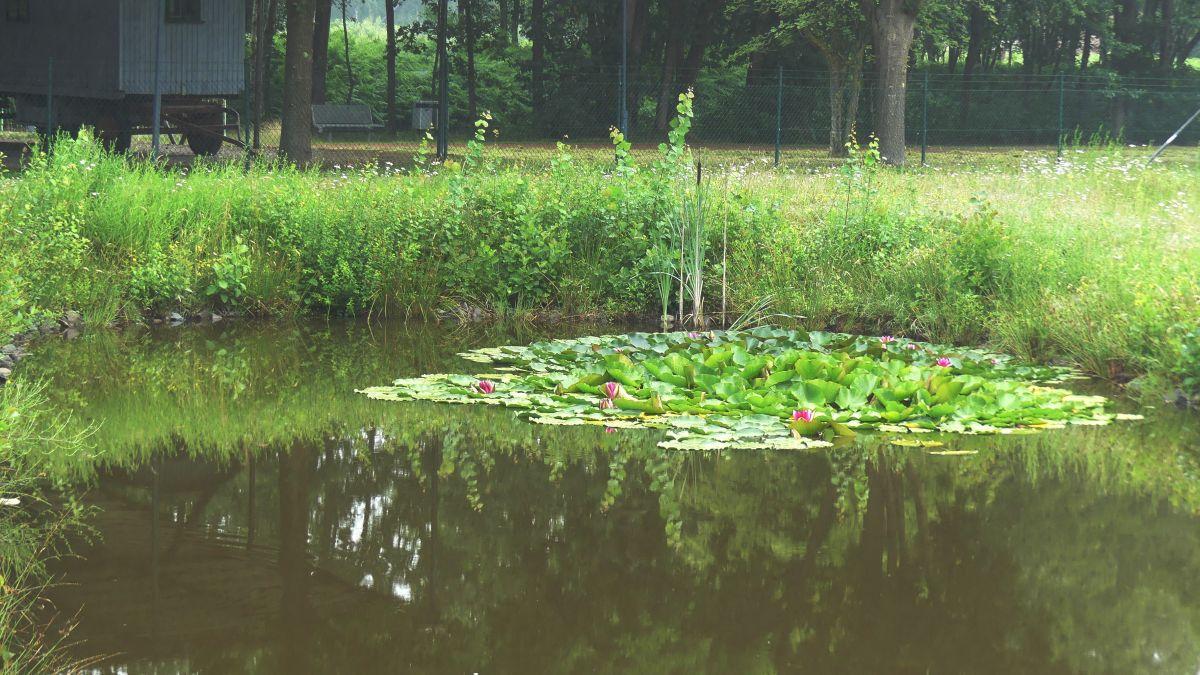 Wasserfläche mit Seerosen im Moormuseum Geeste im Emsland.