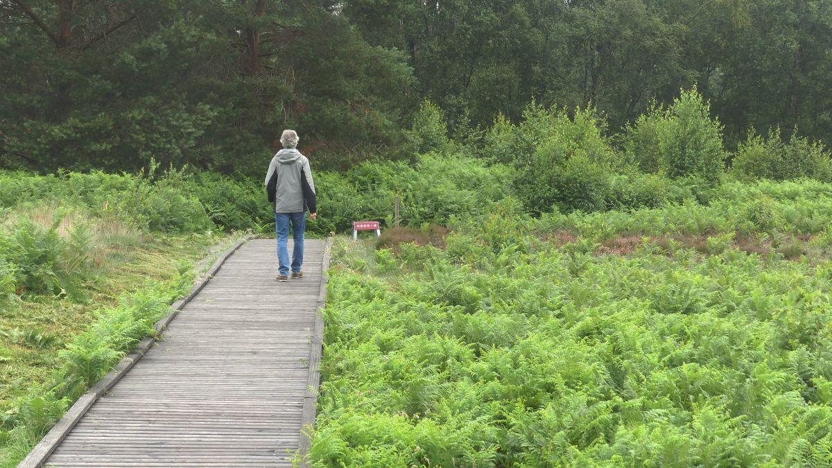 Marcus läuft über einen Holzbohlenweg im Moor.