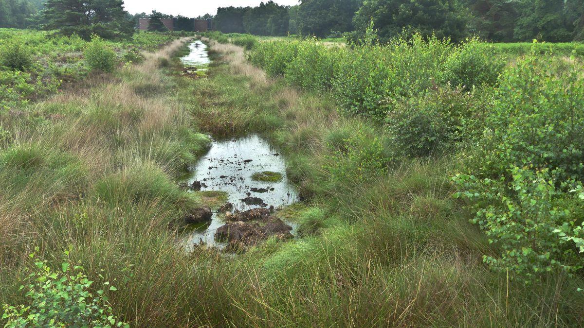 Moorlandschaft mit Gräsern und Wasserflächen.