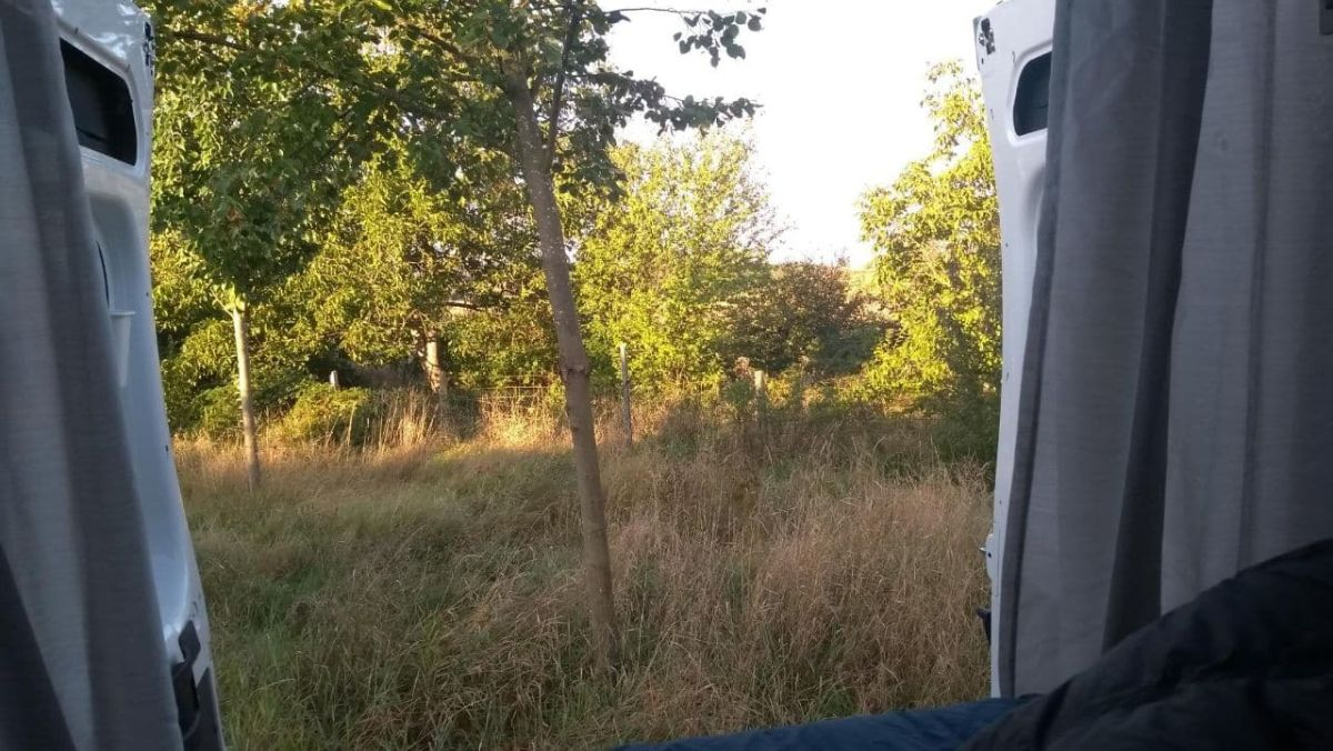 Blick aus den Hecktüren des Kastenwagens ins Grüne.