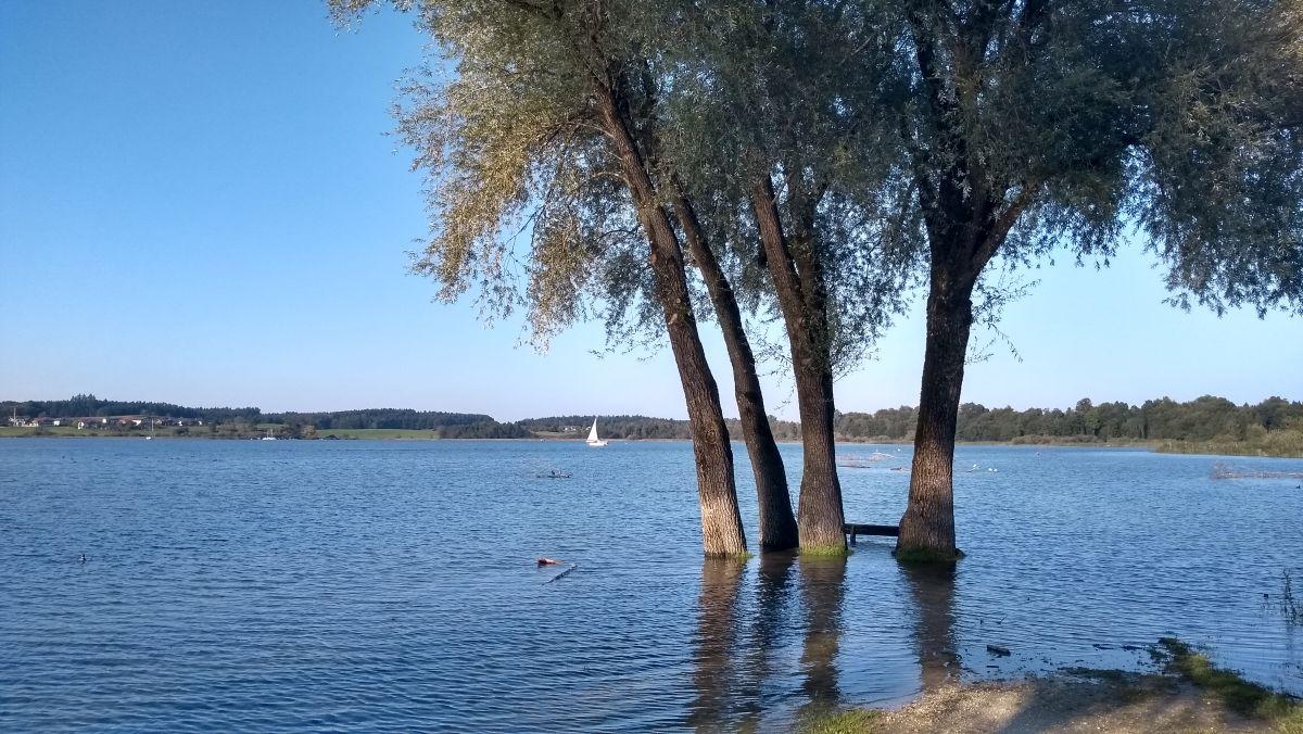 Baumgruppe im flachen Wasser am Ufer des Chiemsee.