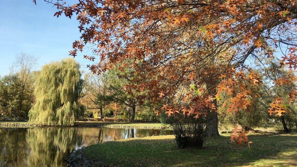 Von Bäumen umstandener Weiher im Beller Park.