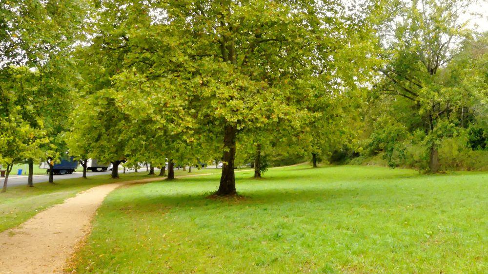 Grüne Wiese mit Laubbäumen.