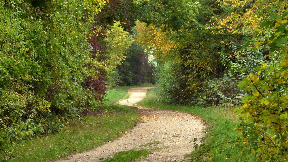Weg führt zwischen dichten Sträuchern hindurch.
