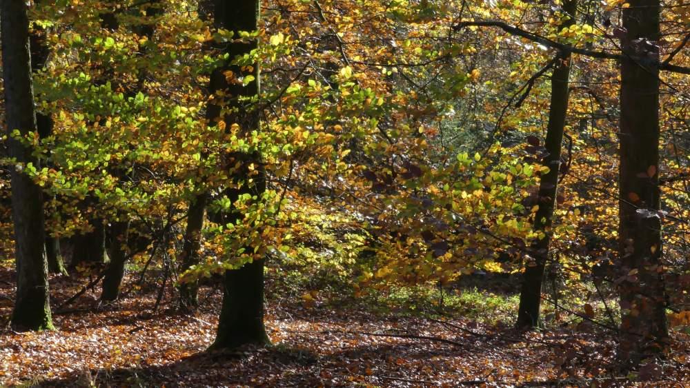 Wald mit herbstlichem Laub.