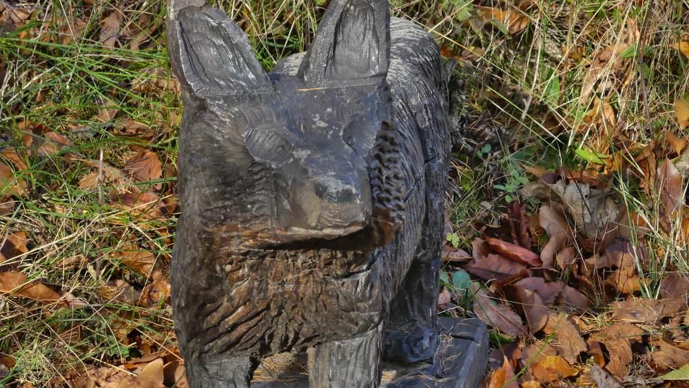 Holzfuchs im Wald,