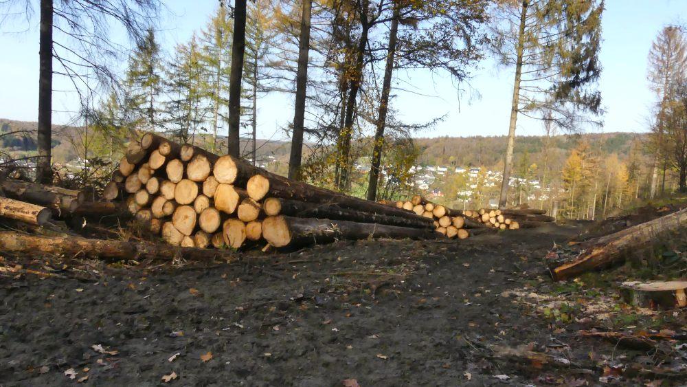 Aufgestapelte Baumstämme.